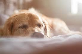 sleeping senior dog.jpg