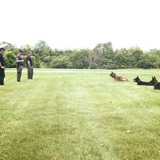 The K-9 Team in Training