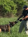 Officer Stedman & K9 Dutch