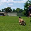 K-9s in Training