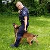 Officer Geiken and K-9 Sully Training Exercise