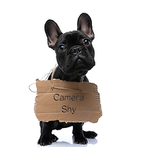 camera shy.png