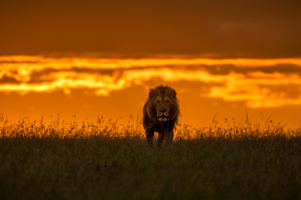 The great Mardadi emerging through golden hues