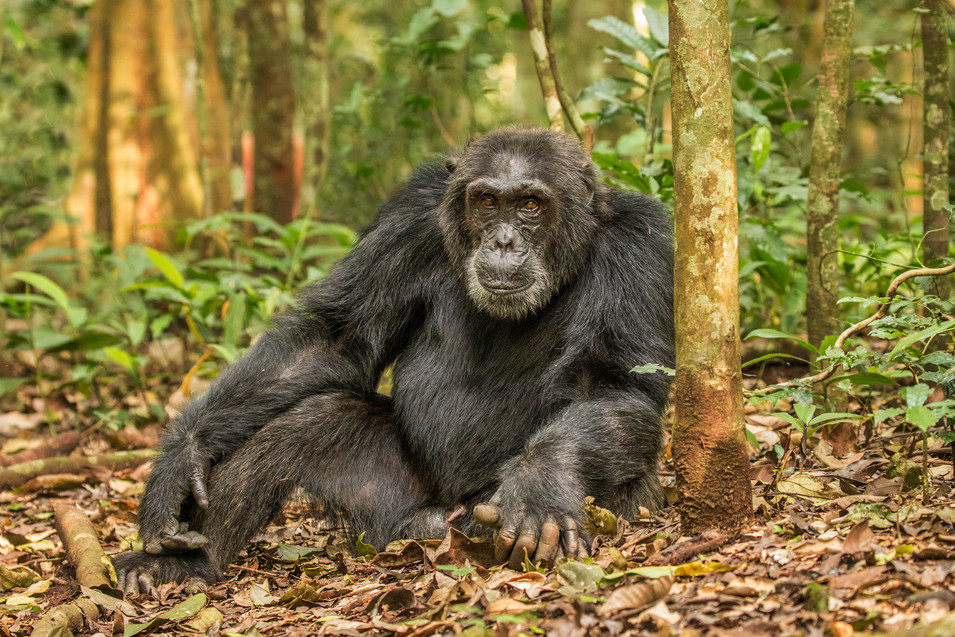 Our closest living relatives