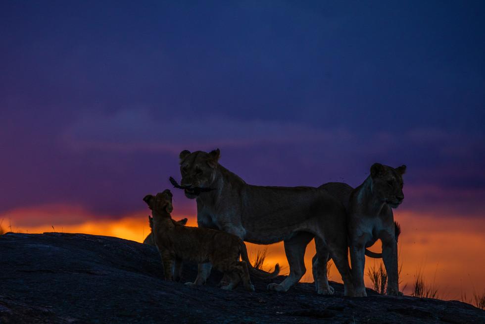 Black Rock pride at sunset