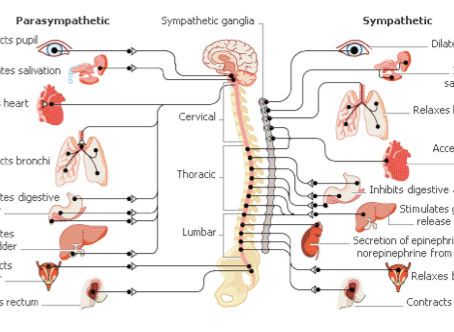 Trauma, the Gunas, and the Human Nervous System: A Course on OMstars