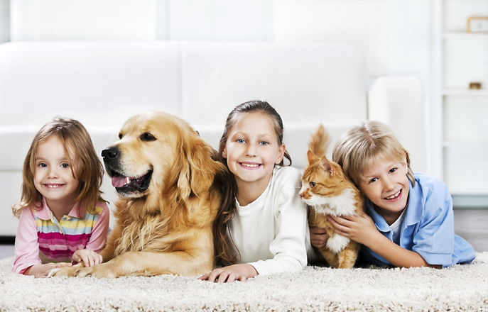 Cairns-Vet-Clinic-family-pet-care-1024x6