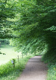 Weg unterm Blätterdach zum Waldspielplatz Riggenbach