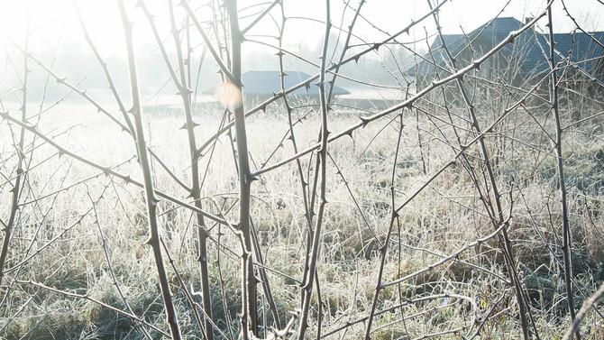 ポーランドに初霜の下りる頃
