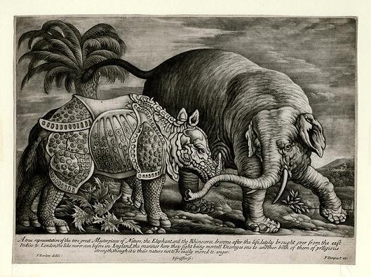 The London Rhinoceros, 1684