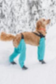Dog gaiters
