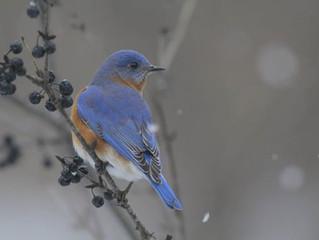 """""""Blue Sky's"""" on a cold rainy day"""