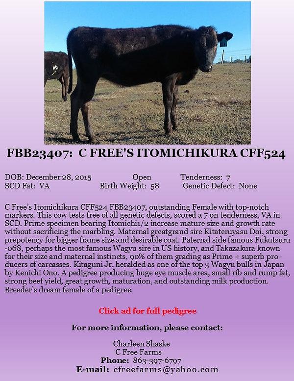 C Free Ito Female Ad.jpg