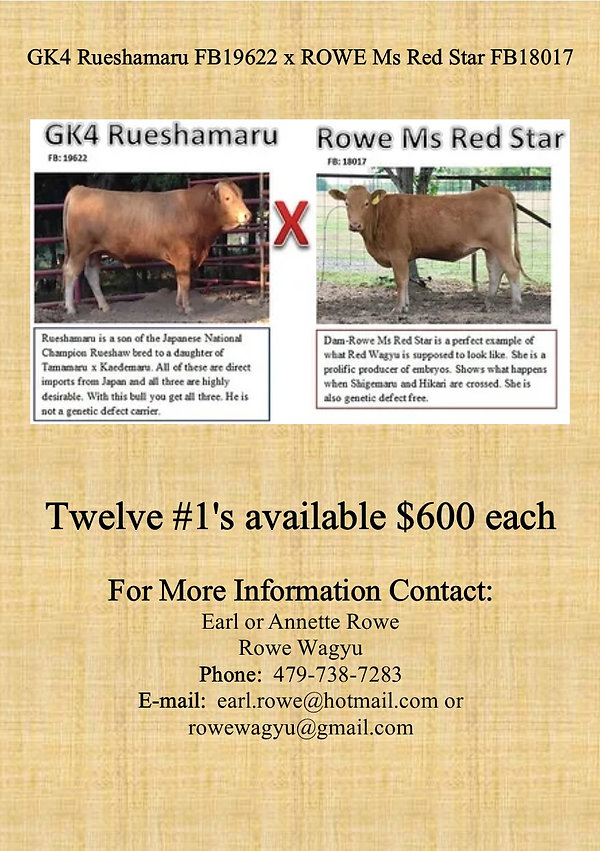 Rue Red Star embryo ad APPROVED.jpg