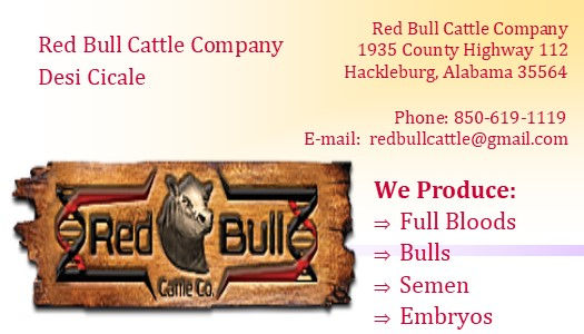 1 Red Bull ad for P2P DONE.jpg