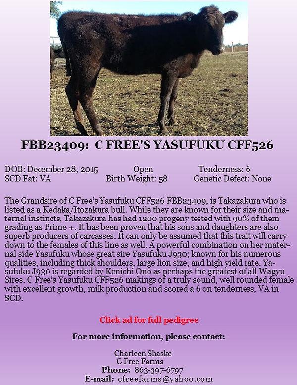 C Free Yasu Female Ad.jpg