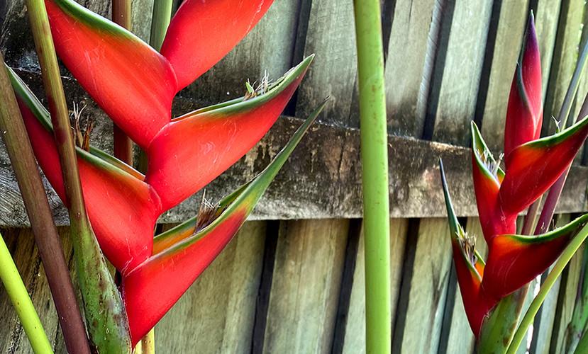 MACAW FLOWER.jpg