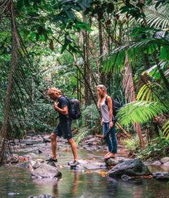 sanctuary-rainforest.jpg