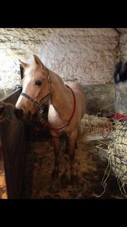 Pony Dolly