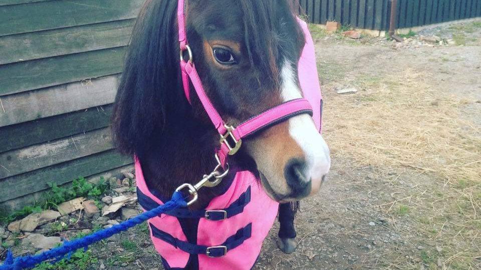 Pony/Unicorn Rides*