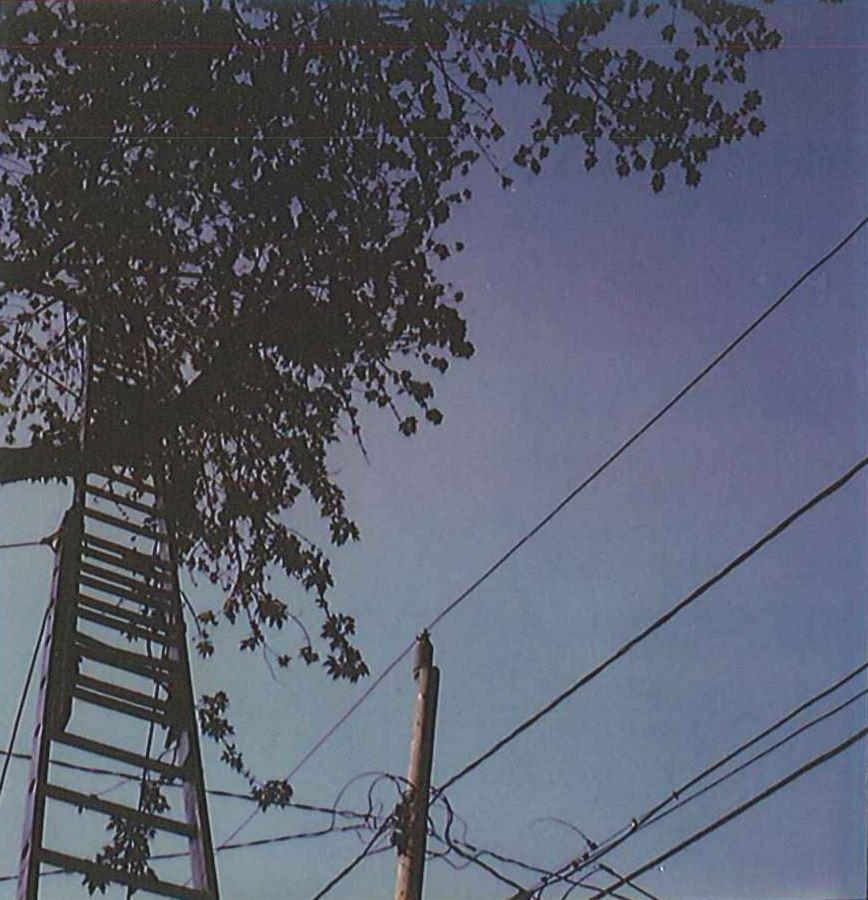 Tree Trimming Electrocution.JPG