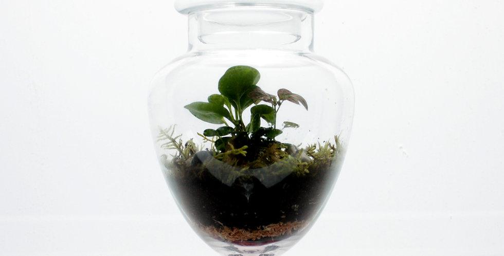 Strawberry Shape Terrarium