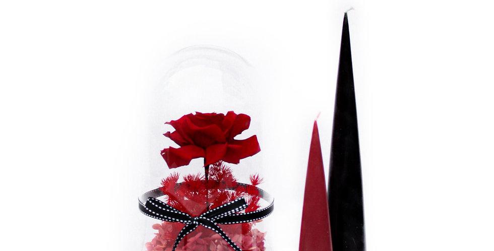 wenderplant terrarium, terrarium sydney, sydney terrarium, preserved flower, everlasting rose, beauty beast, valentine's day