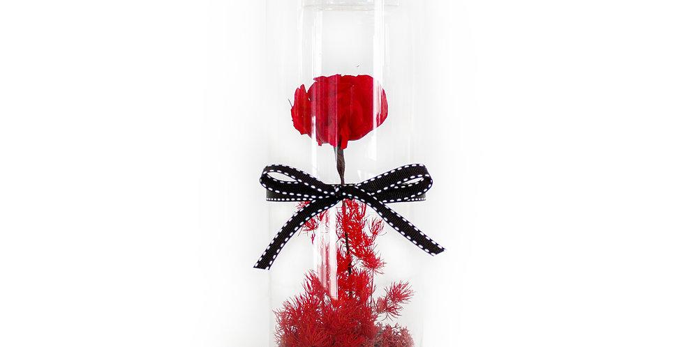 wenderplant terrarium, terrarium sydney, sydney terrarium, preserved flower, everlasting rose, valentine's day