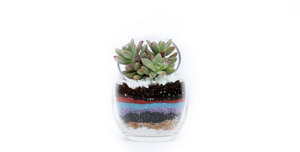 wenderplant, wenderplant terrarium, sydney terrarium, succulent terrarium