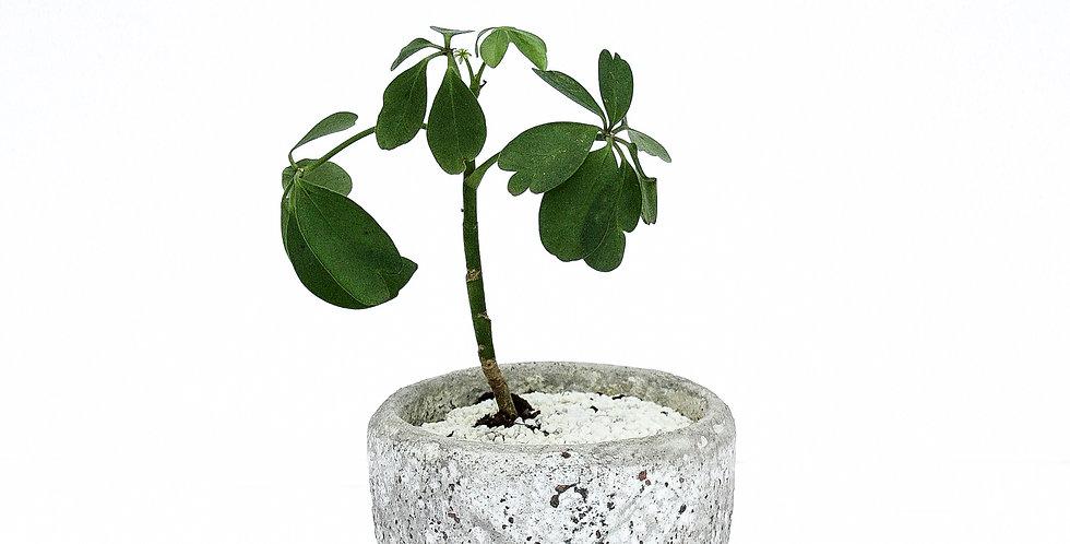 Textured Ceramic Pot Plant