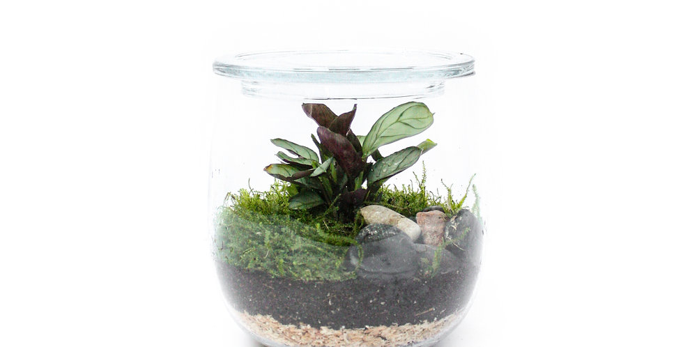 Sydney terrarium, terrarium, indoor plant, plant gift
