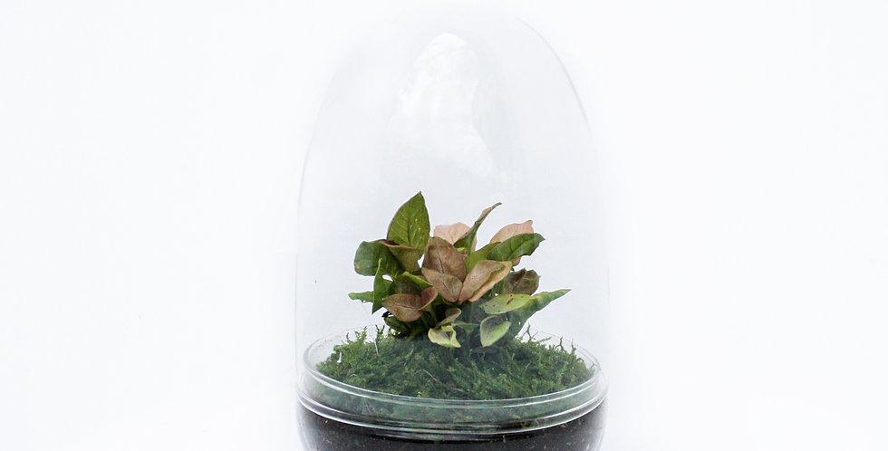 Terrarium Egg Salad