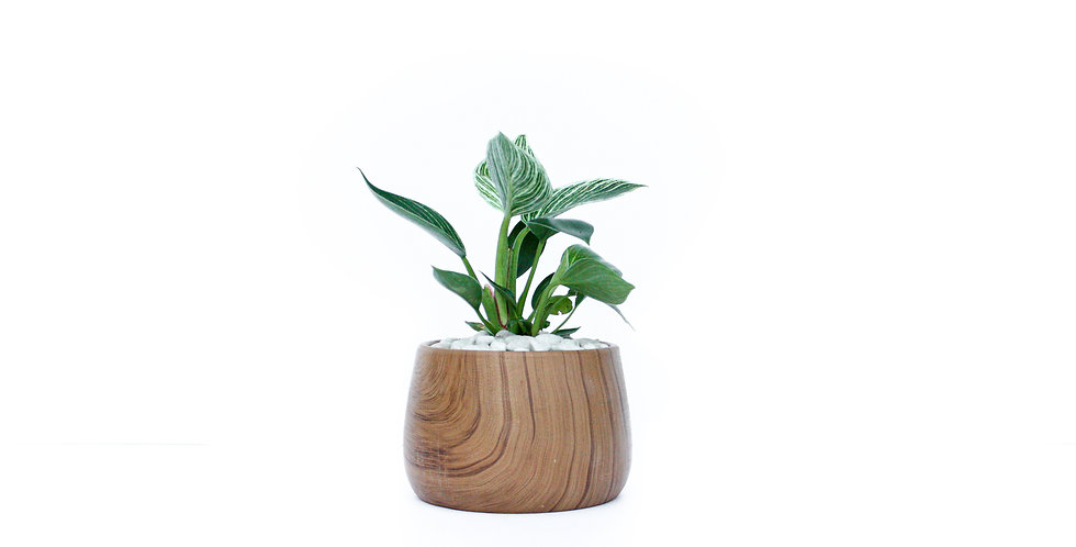 Wooden Pattern Pot Plant