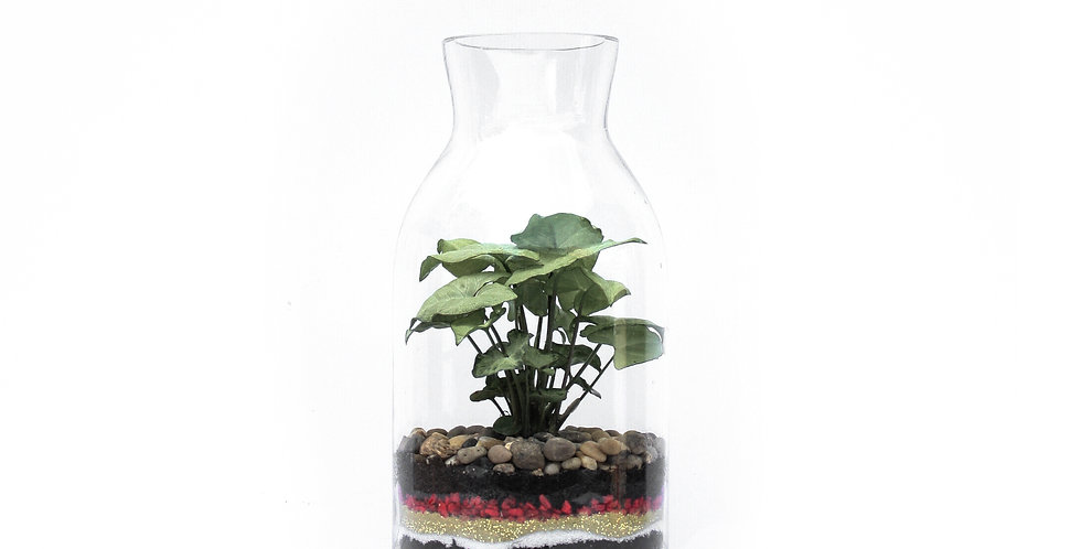 Large Milk Bottle Shape Terrarium