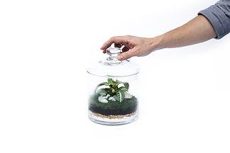 WENDER PLANT BISCUIT JAR TERRARIUM 1.jpg