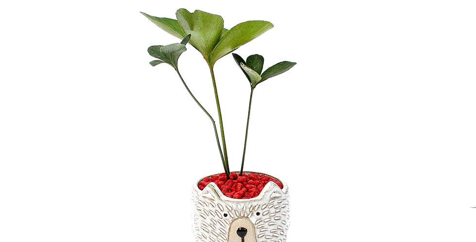 Doggy Pot Plant