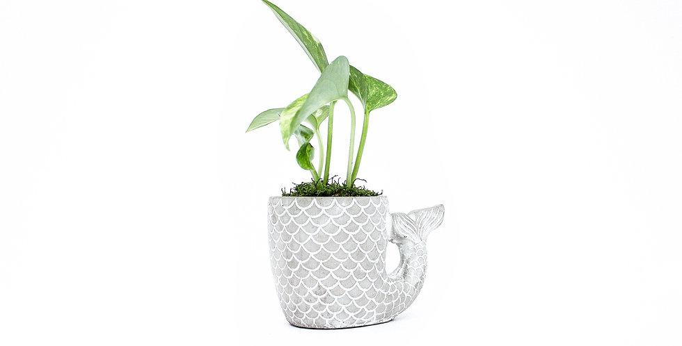 Mermaid Tail Pot Plant