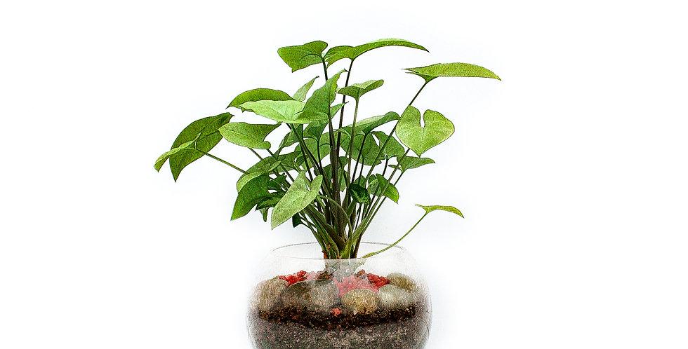 Fish Bowl Pot Plant