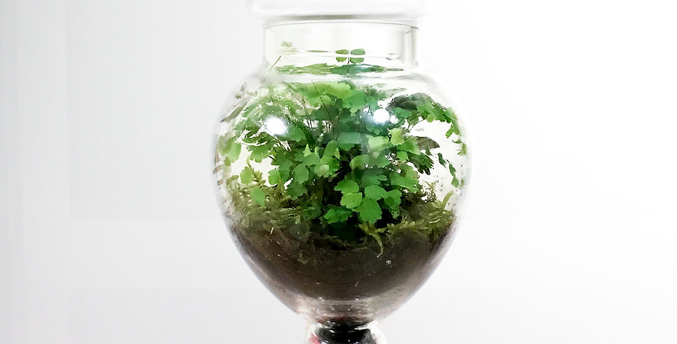 Round Tear Shape Jar Terrarium