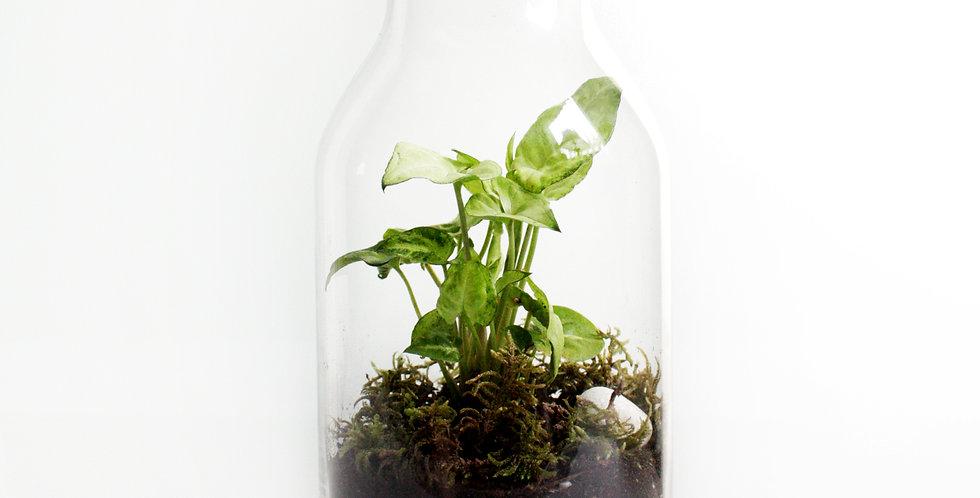 wender plant milk jar terrarium