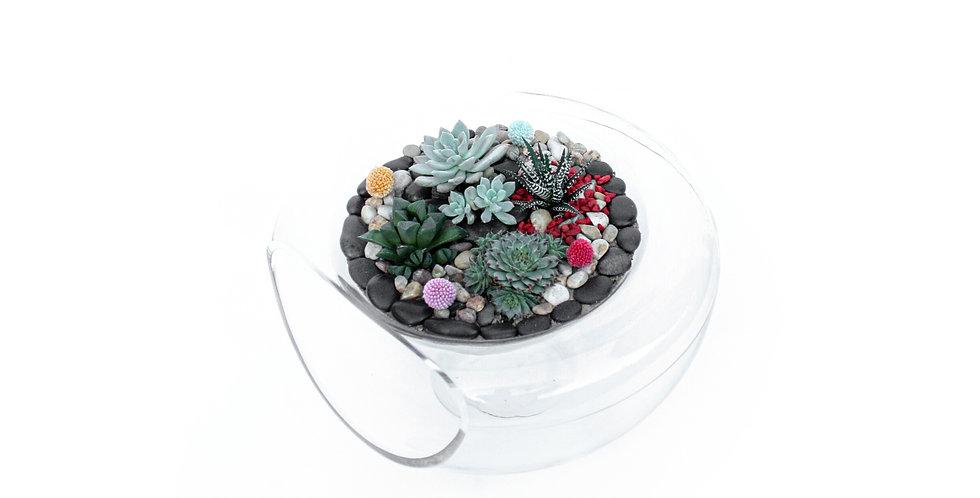wenderplant, wenderplant terrarium, sydneyterrarium, terrariumsydney, succulents, succulentsplanter, succulentsterrarium,