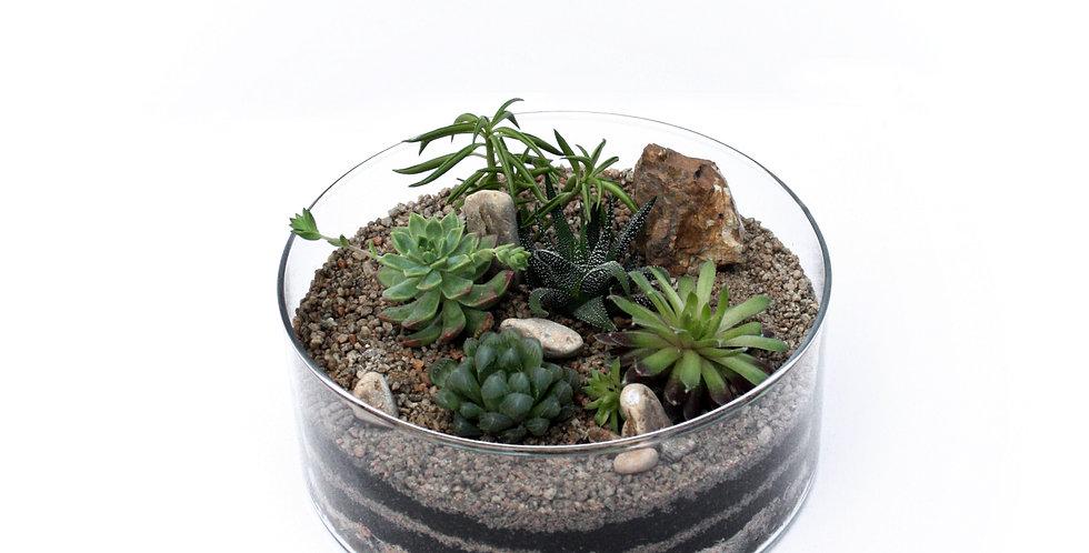 Succulent Desert Planter