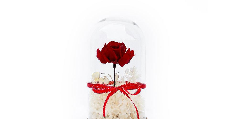 wenderplant terrarium, terrarium sydney, sydney terrarium, preserved flower, everlasting rose, snow white, valentine's day