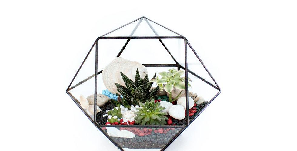 sydney terrarium, succulent terrarium, wenderplant, wenderplant terrarium, succulent planter, geometric terrarium,