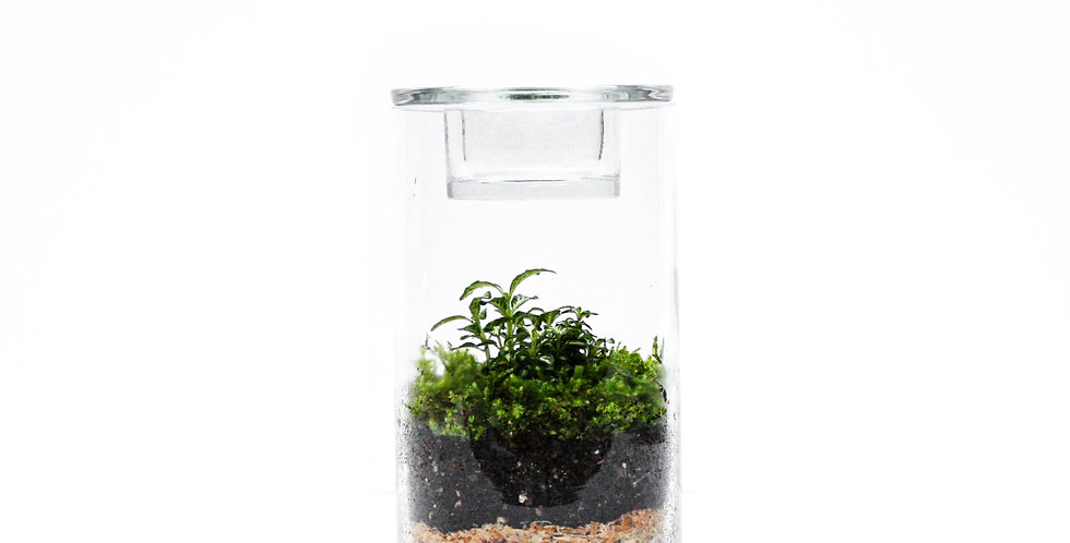 Tealight Tube Terrarium Small