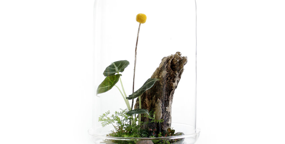 Cloche Terrarium Tall