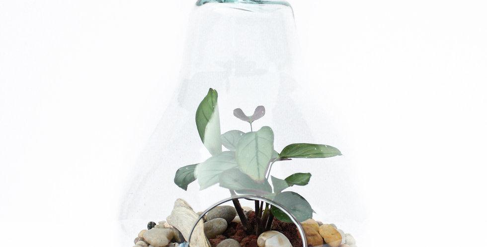 Pear Shape Terrarium