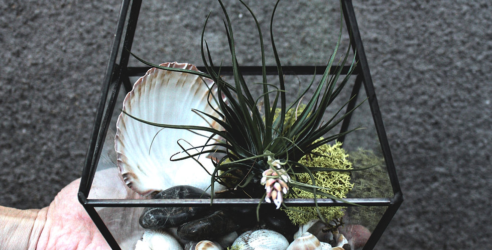 Black Geometric Air Plant Terrarium