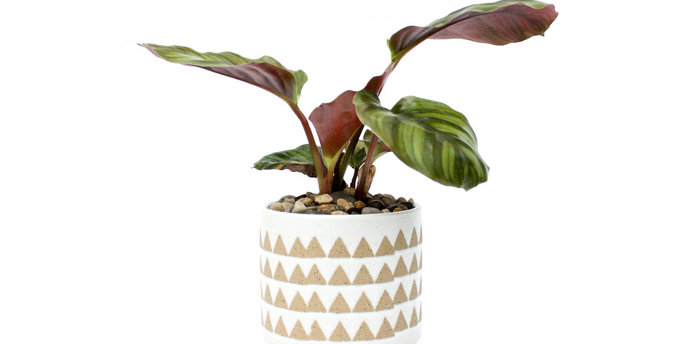 Beige Triangle Pot Plant