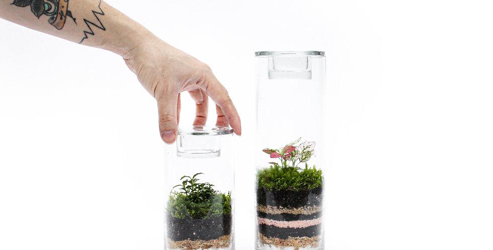 Tealight Tube Terrarium Sets